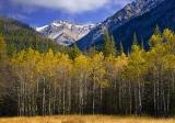 Rocky Mountains & Birch Grove 17288