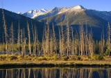 Vermilion Lakes Trees 17143