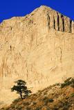 Tree Below Cliff 20051004
