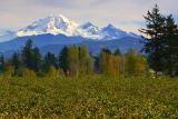 Mount Baker 20051018