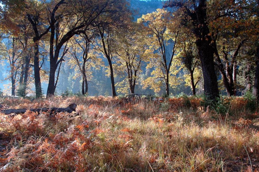 Fall in Yosemite Valley