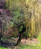 Oregon Inland
