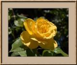 Flower #30