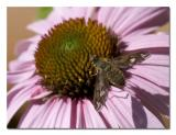 Beefly.jpg