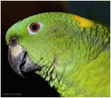 DR-2005-10-11-0152-Parrots-AJ