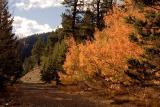 TahoeAutumn10-05.jpg