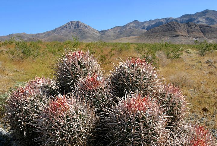 Nevada Landscape II