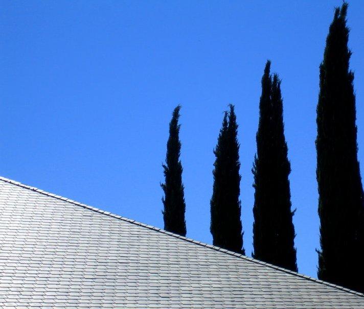 Four Cypress