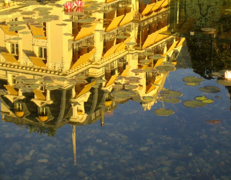 Reflection in Lily Pond