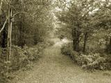 Chemin de For�t