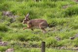 Hare today..............