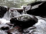 Rushing waters.