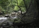 Tremont Creek, Great Smoky Mountain National Park.