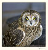 Alberta Birds of Prey (_P9E9943.jpg)