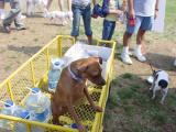Water guard dog