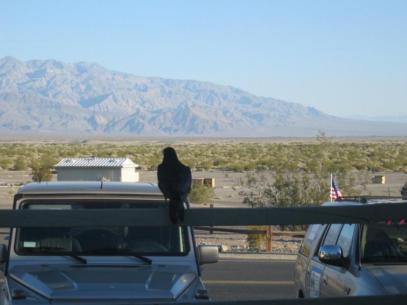 The raven.
