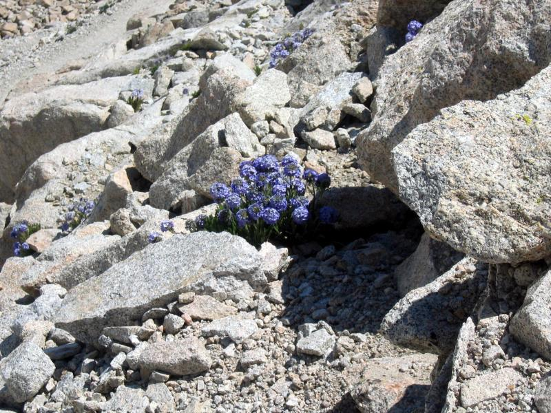 the switchbacks are lined with gorgeous purple bouquets