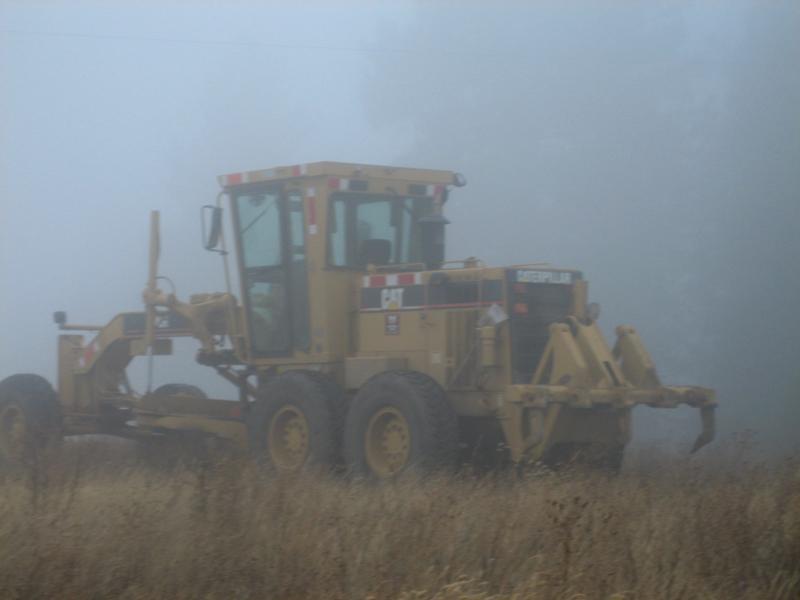 cat sighting through the fog