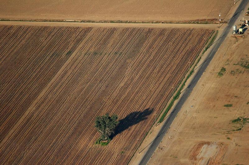 Fields near Bakersfield