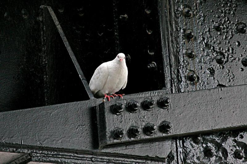 Bird on cast-iron