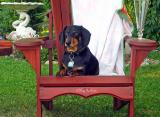 A nominal Dachshund named Phen