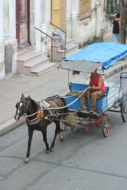 Transporte animal