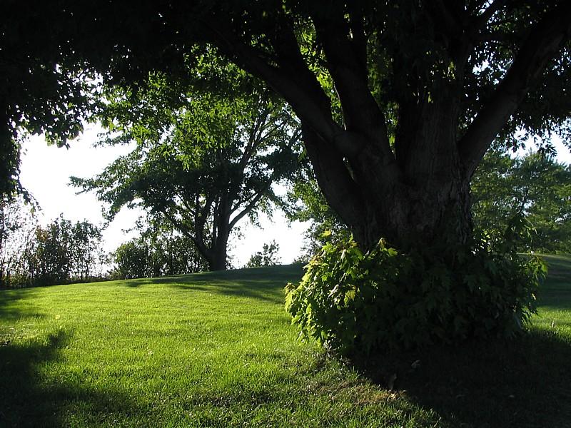 sous les arbres