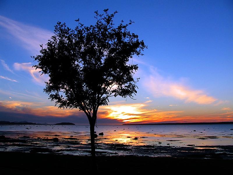 larbre au coucher de soleil, Rimouski