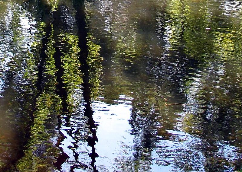 reflection des arbres  , Maizerets