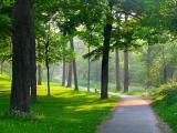le contrejour, Parc du Mont-Royal