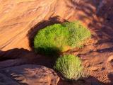 Plante , Arizona
