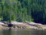 les rives boisées les rochers dénudés