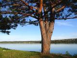 l'arbre et les deux champignons