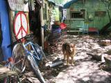 Peace Dog (Fastlane Peace Camp-Scotland)