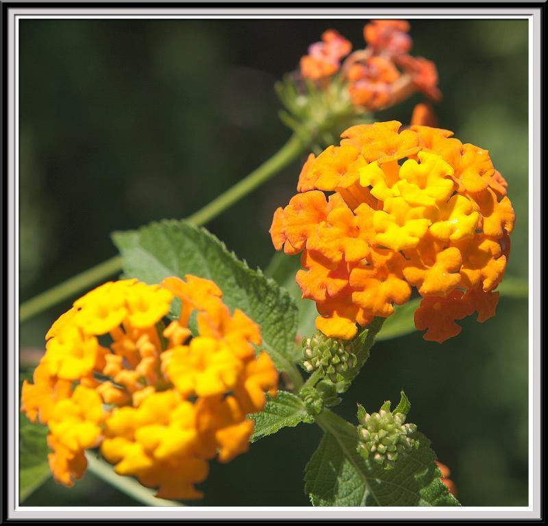State Botanical Garden - IMG_3249 -Crop.jpg