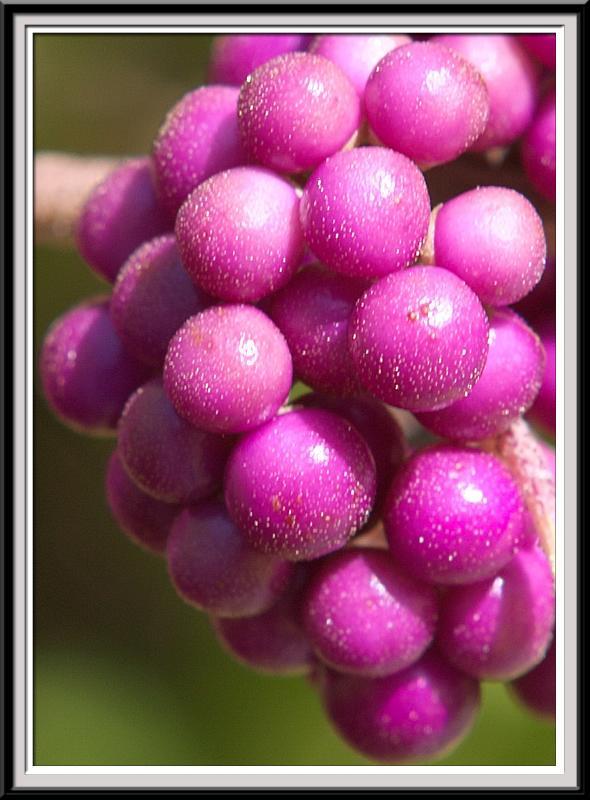State Botanical Gardens - IMG_3258 Crop.jpg