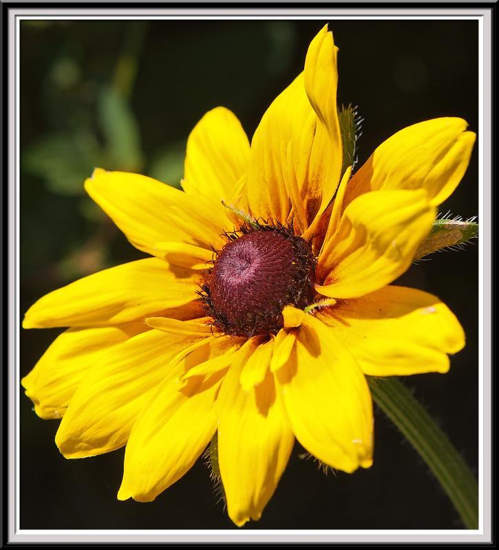 State Botanical Garden - IMG_3336 Crop.jpg