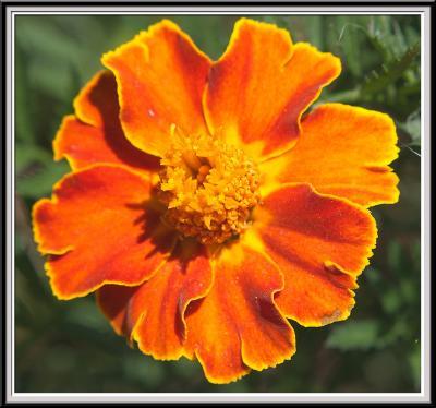 State Botanical Garden - IMG_3245 Crop.jpg