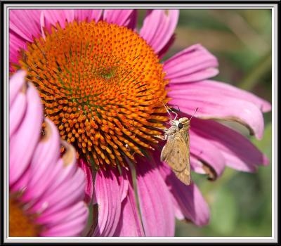 State Botanical Garden - IMG_3298 Crop.jpg