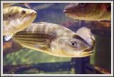 Aquarium - IMG_2087.jpg