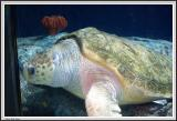 Aquarium - IMG_2101.jpg
