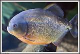 Aquarium - IMG_2114.jpg