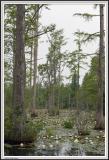 Cypress Gardens - IMG_2136.jpg