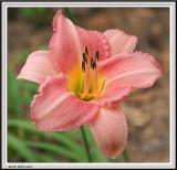 Cypress Gardens - IMG_2139 - Crop.jpg