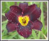 Cypress Gardens - IMG_2158.jpg