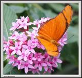 Cypress Gardens - IMG_2193 - Crop.jpg
