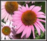 State Botanical Garden - IMG_3301 Crop.jpg