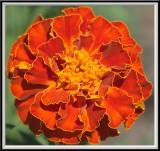 State Botanical Garden - IMG_3265 Crop.jpg