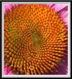 State Botanical Garden - IMG_3296 Crop.jpg