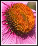 State Botanical Garden - IMG_3299 Crop.jpg